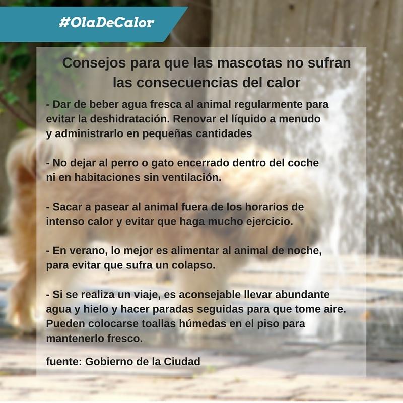 Ola de Calor - mascotas