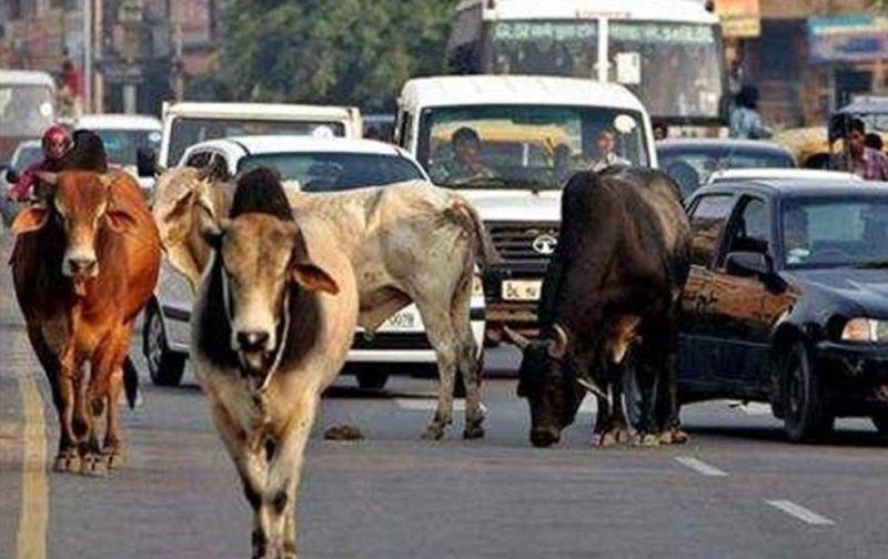 India: Derechos para igual para humanos y animales